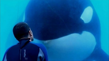 See? All the killer whale wants is a kissie, along with a side platter of blood and guts, but hey, we're losing the point!