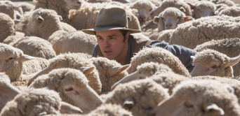 Oh, I get it. He's a sheepish guy, in the middle of a flock of sheep! Clever! I think..