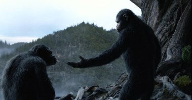 """Come on, bro. You're an ape, I'm an ape, let's just be ape for one another."""